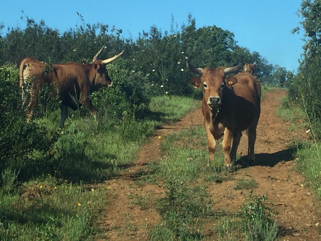 vacas-de-la-raya-tienda-online